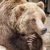 Douglas Triggs: bear