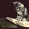 kitty ☯ librarycat reads