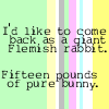 Michelle: Life - Flemish Rabbit