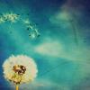 Random - Wish [Dandelion]