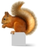 333_squirrels userpic
