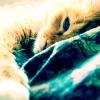 kitty ☯ sleepy tiems