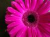 thongfridays userpic