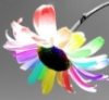 encaleflora userpic