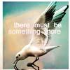 chrissi_00: bird