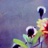ccharlotte userpic
