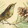 Sparrow-Type Bird