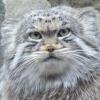это котЪ и он смотрит на вас...