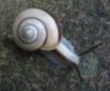 katatsumuri, snail, slow