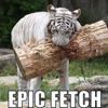 tiger, fetch