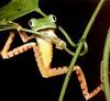 NM: жаба