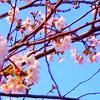 nova_usagi userpic