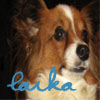 laika_butterfly userpic