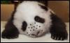 freckledpanda userpic