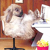Юлия Налётова (luciferino): Кролик Роджер