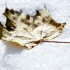 Андрей: winter 08-09