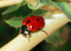 ladybird68 userpic