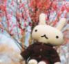 sourbunny userpic