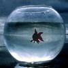 small, introspective, goldfish, bubble