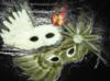 Maskerella