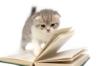 Чукча-читатель