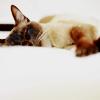 kePPy: General: cat nap