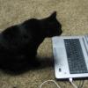 mr_kittybutt userpic