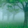 heartofdavid: treesfoggy