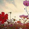 tamar userpic