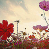 (nature) flowery