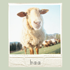 Random - Sheep Baaaaa