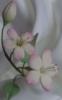 cherriiblossoms userpic