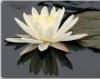 lotus85m userpic