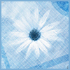 where all the scars from the nevers and maybes die: blue daisy