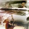 bardicvoice: impala Impala