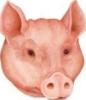 Поцілуйтеся зі свинею!