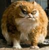 2 peter-cat