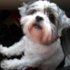 caninelymphoma userpic