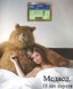 это я Медвед