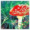 spcebaby userpic