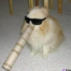 sunnyspectacles userpic