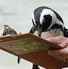 Penguin Survey