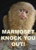 Marmoset!