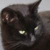 кот, черный кот