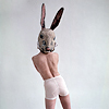 rabbit_head