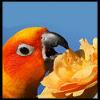 conure userpic