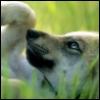 linzu userpic
