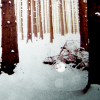 Stock-Winter-Snowy woods
