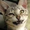 Astrocat: Cat - dorky