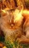 cat_of_sun userpic